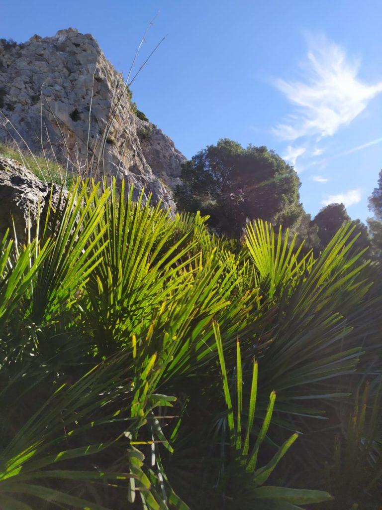 Andenes de Alcaparaín. Casarabonela. Sierra de las Nieves.