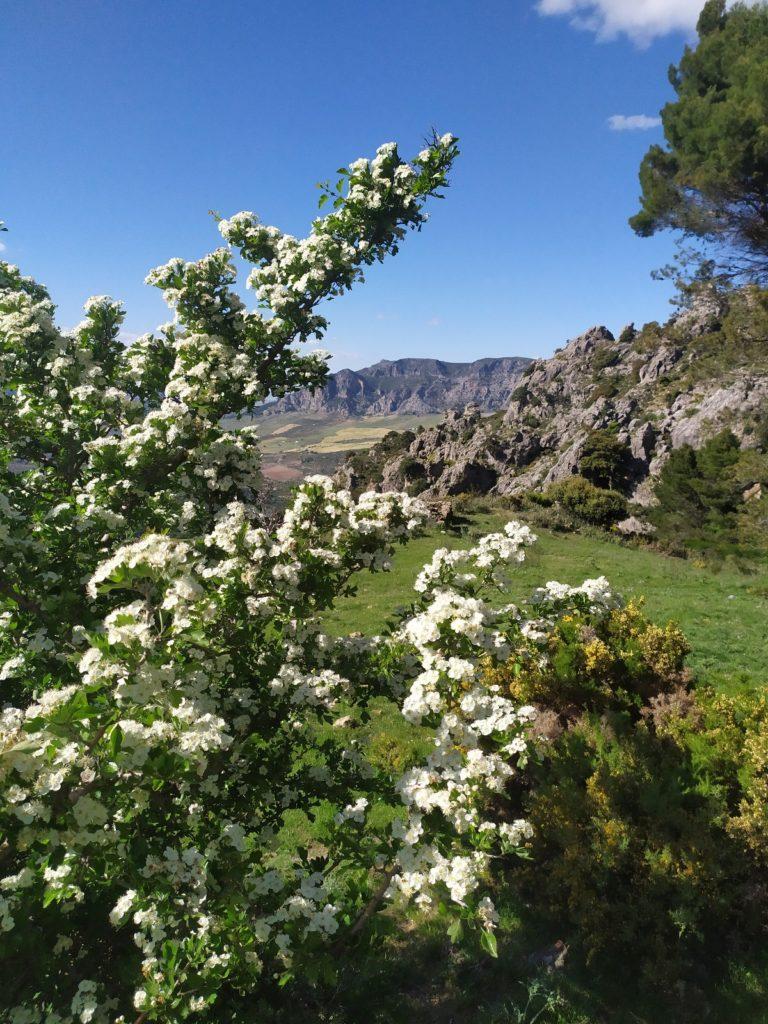 Atalaya_Arroyo de las Doncellas. Casarabonela. Sierra de las Nieves.